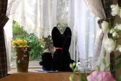 突然我が家にやってきた黒猫?