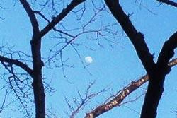 福祉大の構内で見た月