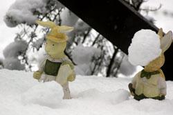 ウサギの雪合戦?