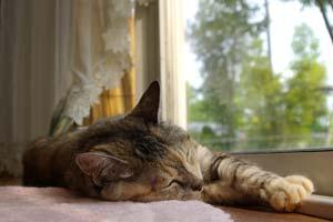 窓辺でお昼寝中のクーです