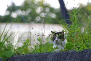 戻ってきた親猫?
