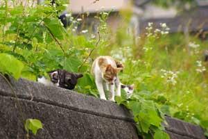 親猫と一緒の子猫たち