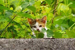 そしてもう1匹の子猫