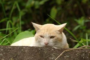 草むらにいた別な猫