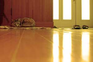 玄関で休むクーです