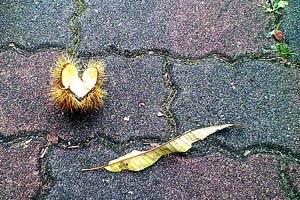 歩道の毬栗