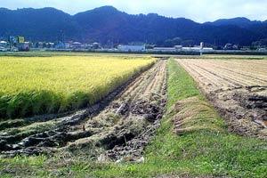 稲刈りが進む茂庭の田んぼ