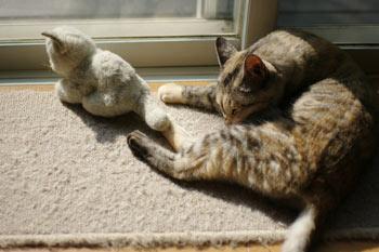 クーとミーちゃんとの日光浴