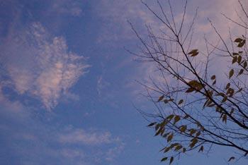 夕方の空と葉が落ちたけやき
