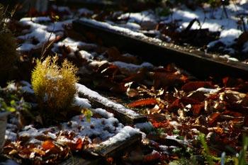 庭に積もった雪